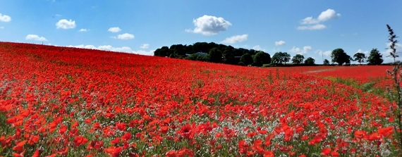 Funding awarded for First World War centenary projects